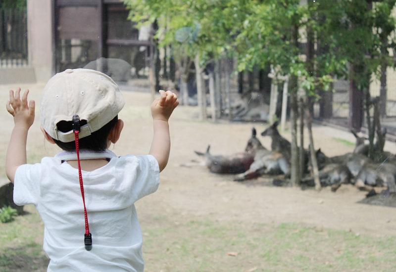 金沢自然動物のカンガルー